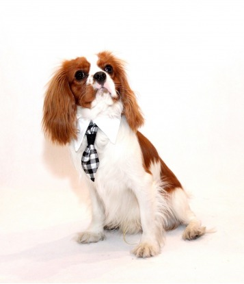 Krawat dla psa