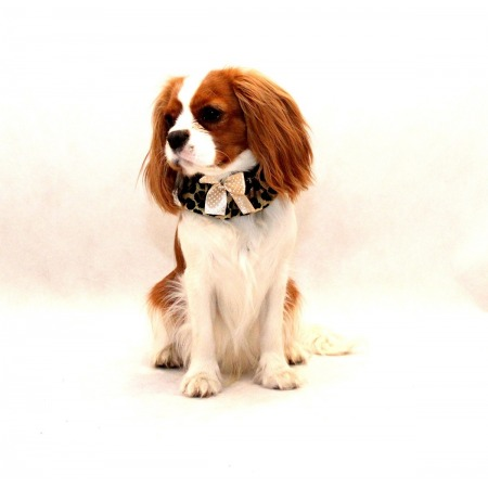 Kołnierzyka dla psa panterka z kokardką