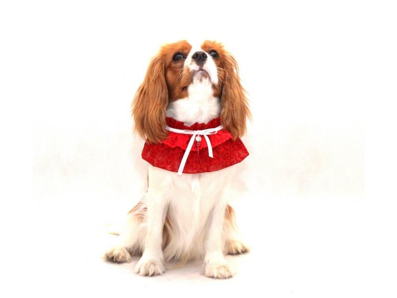 Kołnierzyk dla psa czerwony z białą kokardką