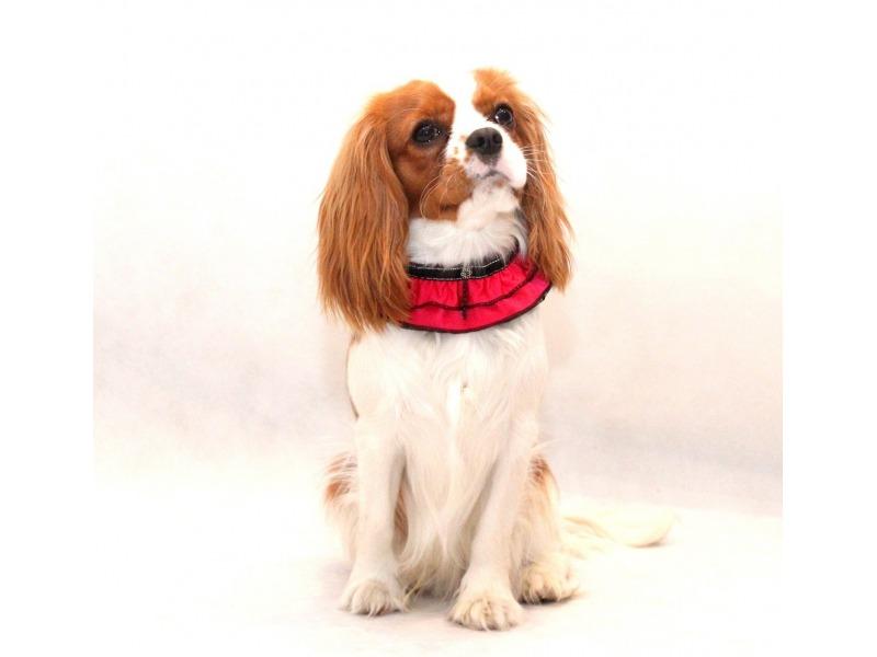 Kołnierzyk dla psa różowy