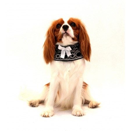 Kołnierzyk dla psa czarny z białą kokardką