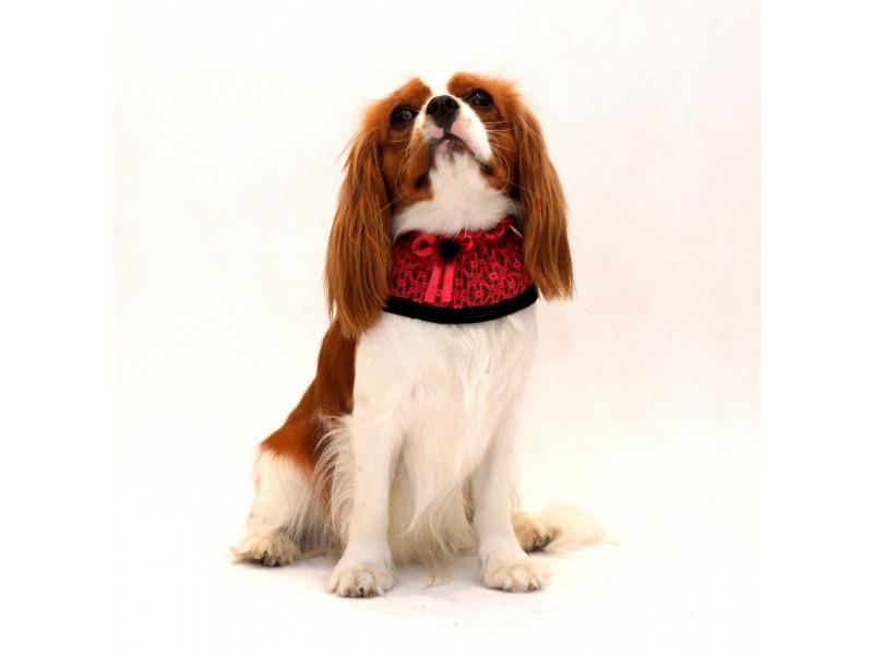 Kołnierzyk dla psa czerwono- czarny