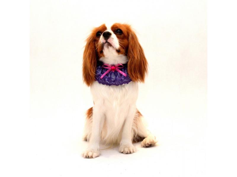 Kołnierzyk dla psa fioletowy z różową kokardką