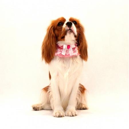 Kołnierzyk dla psa różowy z białą kokardką